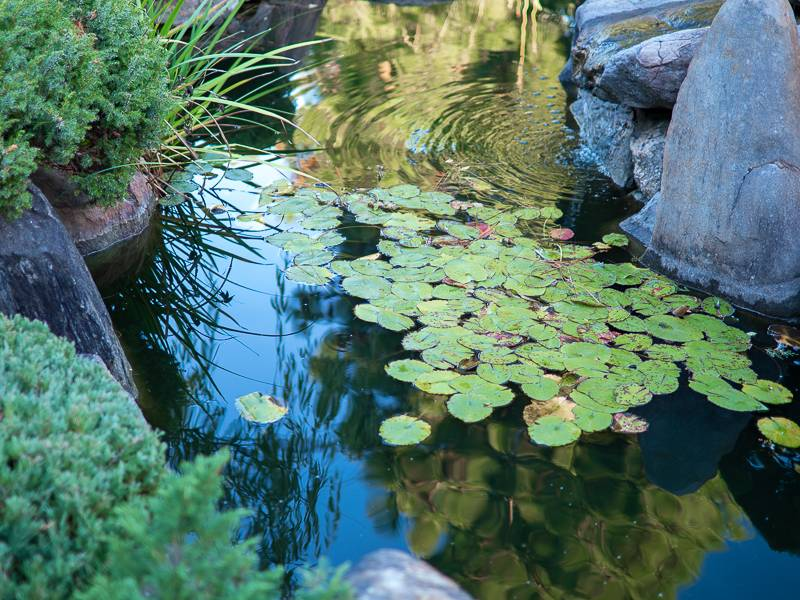 The Essential Elements of an Oriental Garden - Water – whether it's a fountain, pond, waterfall, or even a water bowl, Australian Outdoor Living.