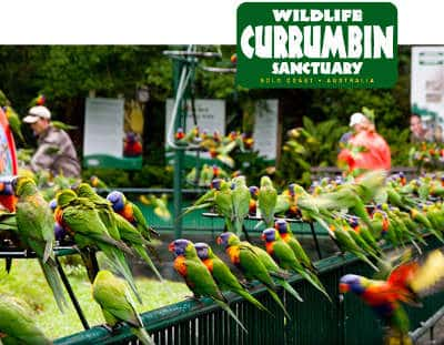 The 4 Best Outdoor Experiences in Queensland - Currumbin Wildlife Sanctuary, Australian Outdoor Living.