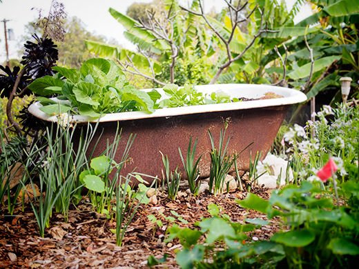 8 One-of-a-Kind Raised Garden Beds - Bathtub garden bed, Australian Outdoor Living.