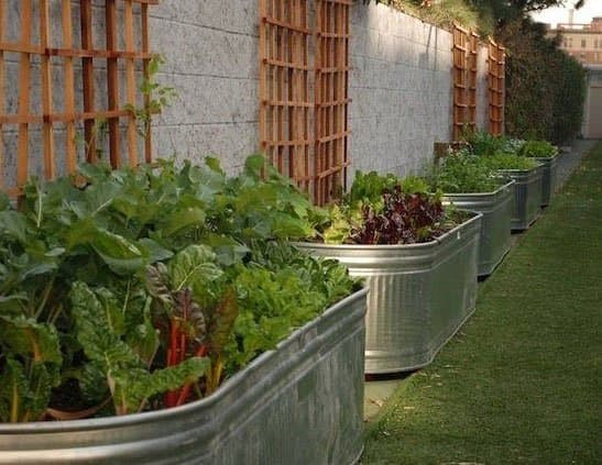8 One-of-a-Kind Raised Garden Beds - Animal troughs, Australian Outdoor Living.