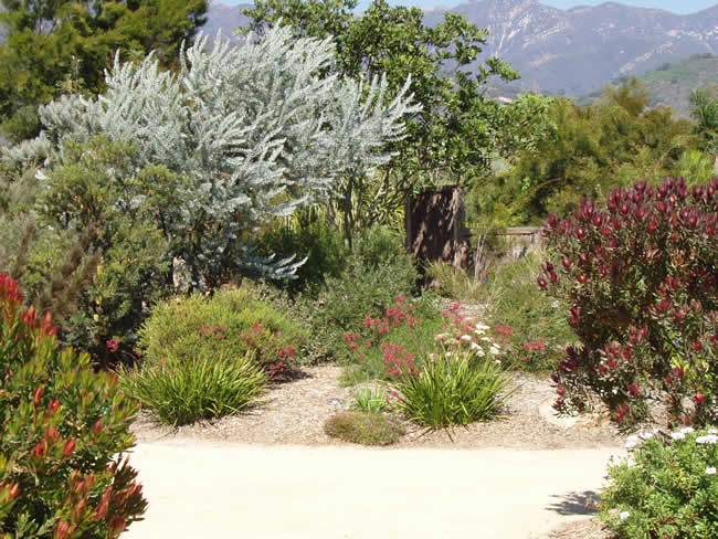 Amazing Australian Native Garden Designs - This dry garden utilises colour to great effect, Australian Outdoor Living.
