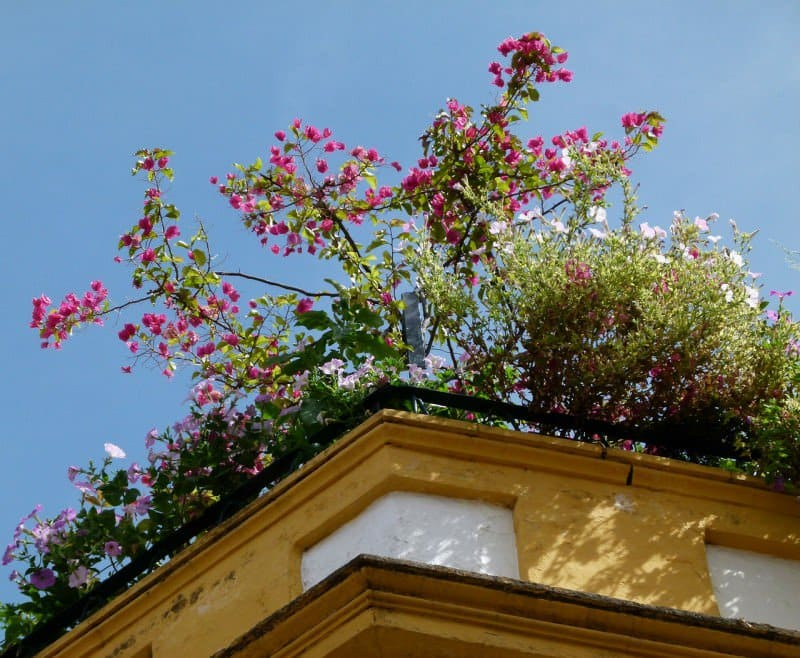flowers on roof
