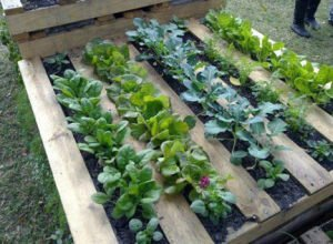 8 One-of-a-Kind Raised Garden Beds - Pallets garden bed, Australian Outdoor Living.
