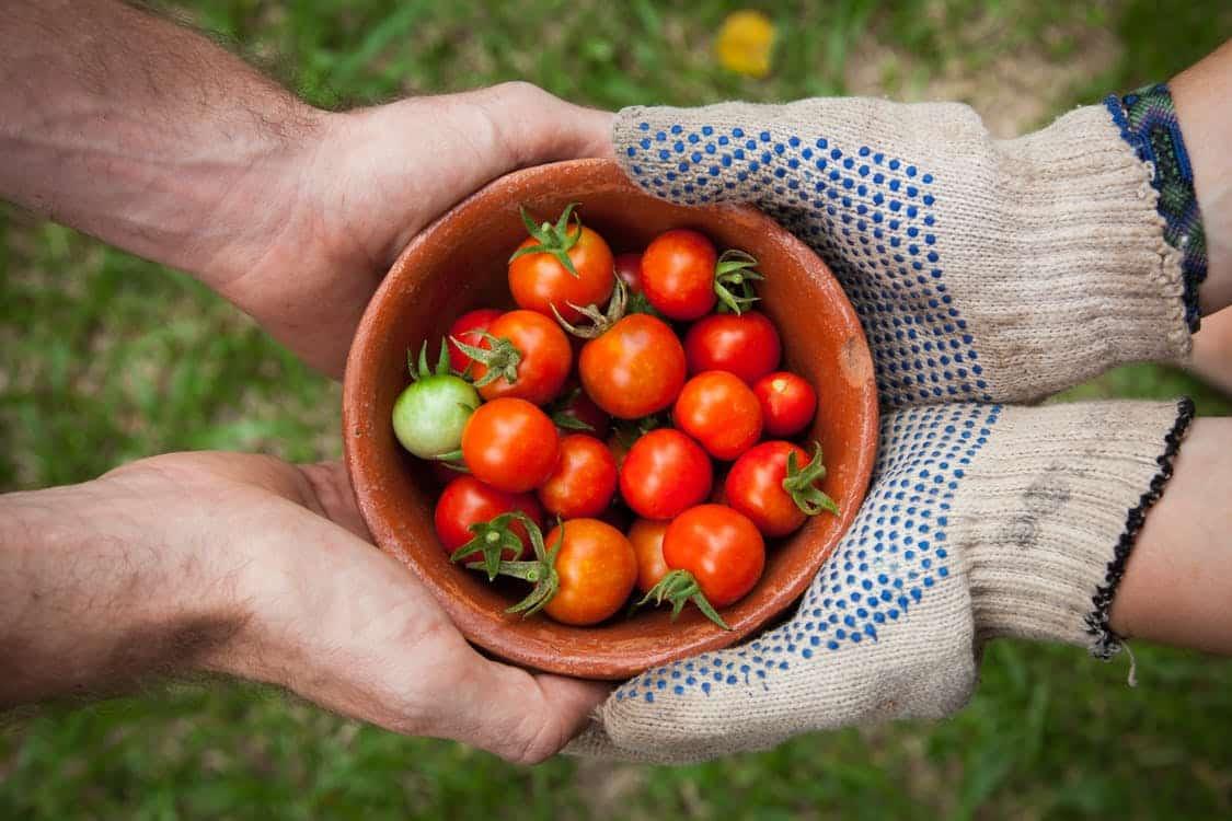 Make (and Eat!) Your Own Edible Garden - Make your own Edible Garden, Australian Outdoor Living.