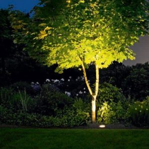 An Illuminated Tree