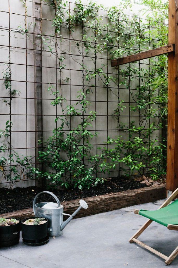 Garden Wall Creepers