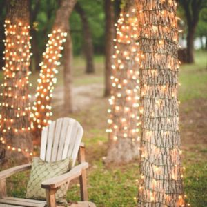 Fairy Lights Wrapped Around Trees Steven Michael Photo