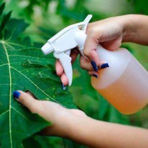 Natural Pesticides Balcony Garden Web