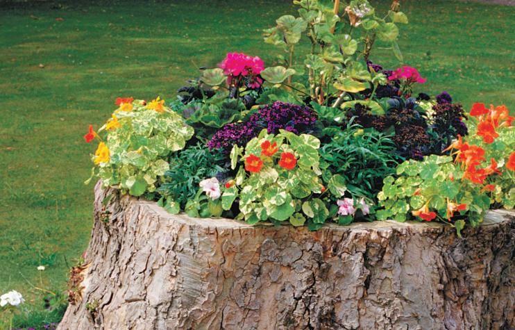 Hide the Junk: Concealing Your Backyard Eyesores - Tree stumps, Australian Outdoor Living.