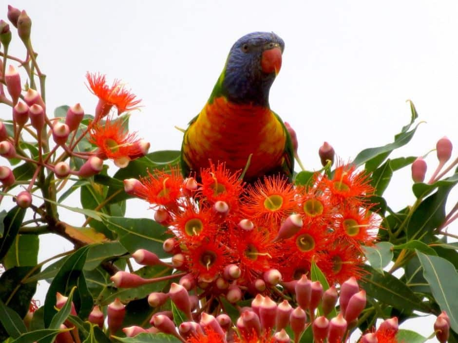 How to attract wildlife to your backyard - Plant the right plants, Australian Outdoor Living.